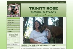 trinity-rose.jpg